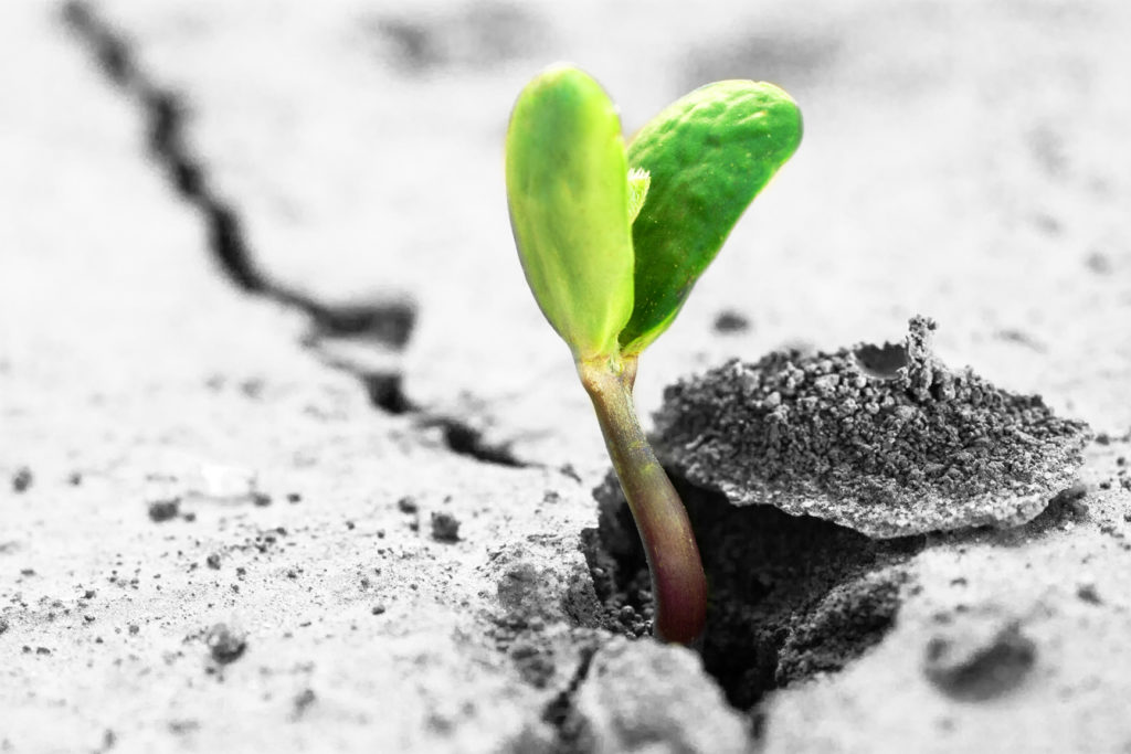 Supporting the viability of long-term growth