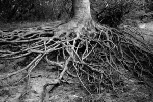Roots all over